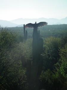 Baja California-Mazatlan-Tepic